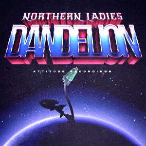 dandelion_digicover